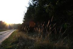 Natur 7