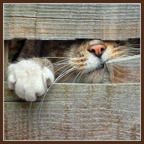 Please Let Me In!! photo by adrians_art