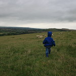 A short stint as a shepherd<br/>19 Aug 2007