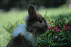 RABBIT photo by Momenti di Montagna