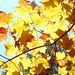 Feuilles-d'automne-III