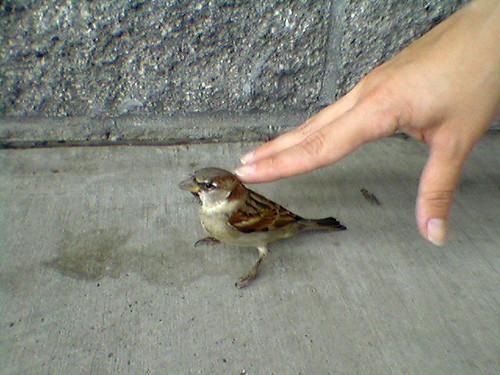 babybird oct 1, 2006