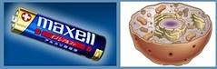 Η μπαταρία, ο οδοστρωτήρας και οι βιολογικές δομές