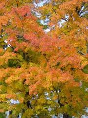 SundayRiverFoliage