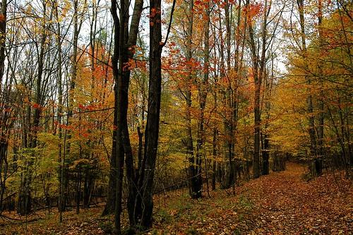 Leaf covered trail.