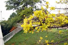 Ranting pohon di Tulsa