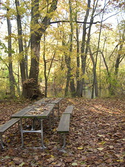 Picnic Table and Leaves