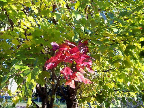 redleavesgreentree