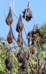 Bats up close