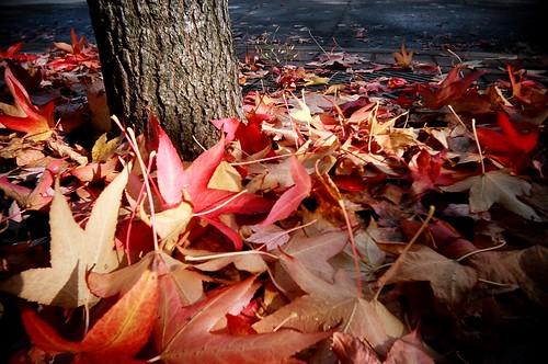 go leafs! go!