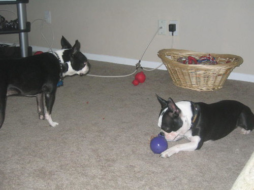 joey pretending like he doesnt care that tanner has the toy