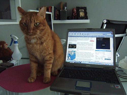 tiger-laptop
