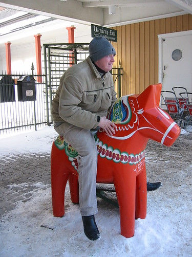 Riding a Swedish Horse