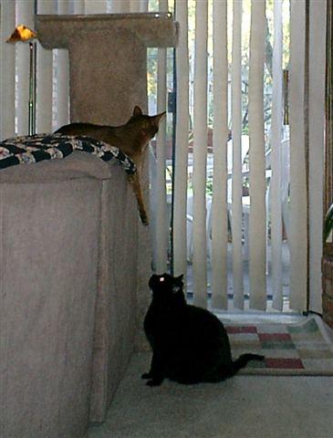 kitties_111406