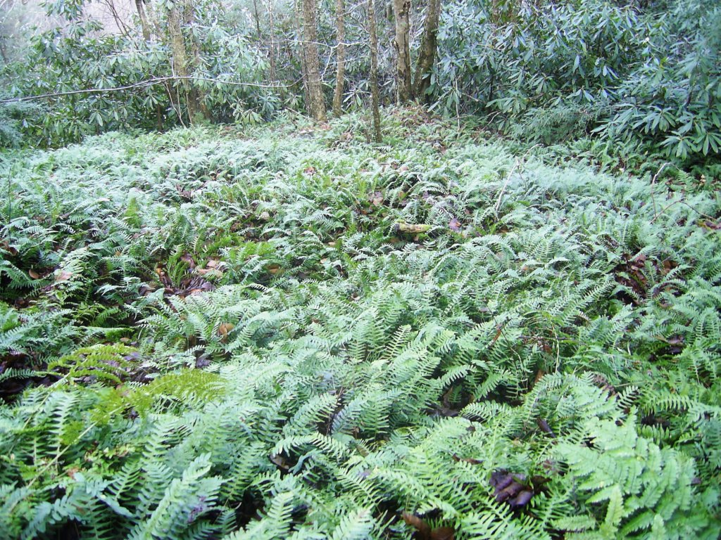 A Profusion of Ferns