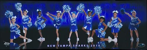 Sharks cheerleaders attitude photo