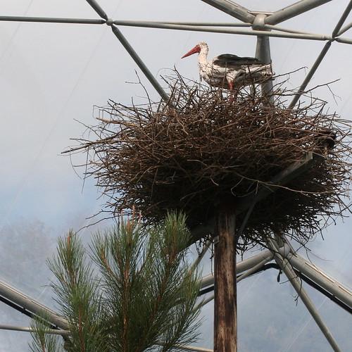 Eden - Stork