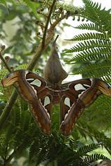 Butterfly 15444