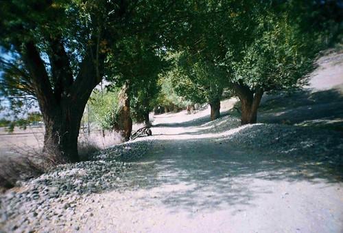 Tree lined roads near Shitkhraw, Tajikistan / きれいな道路(タジキスタン、シットホロー村)