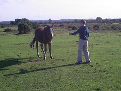 Boy and horse