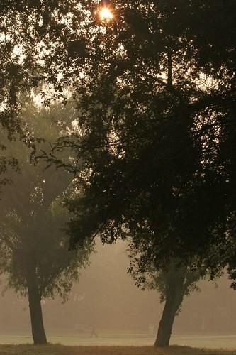 IMG_0308 Sunrise in Lodhi Gdns, Delhi, 5th Nov 06