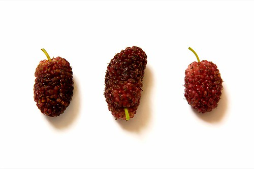 mulberries© by haalo