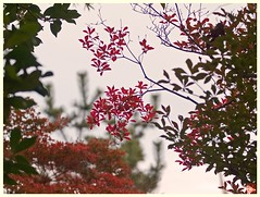 Leaves 061116 #03