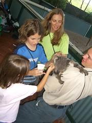 Koala Petting