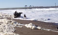 Rex running through sea foam