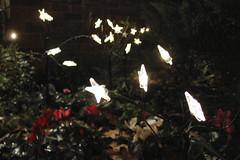 Christmas lights #1