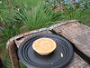 Australia - Macadamia Nut Tartlet