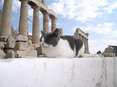 Un gato en el Partenón