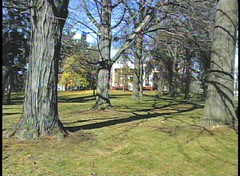Old Trees Outside The Ingersoll House in Niskayuna, New York.
