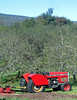 Stribling Orchard Red Tractor
