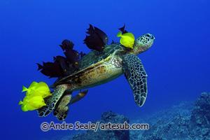 Turtle grooming