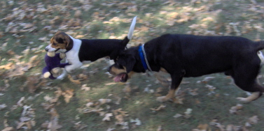 Fwd: Pups