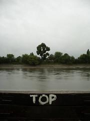 2006-10-20 024 - Black Toplar