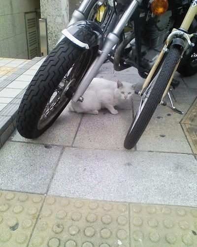 未来猫ウラシニャン