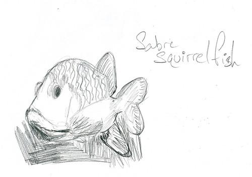 Sabre Squirrel Fish