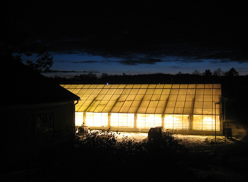 Glowing Greenhouse