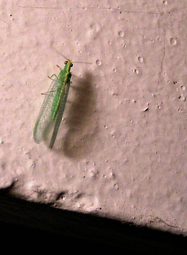 green bug on the wall 3