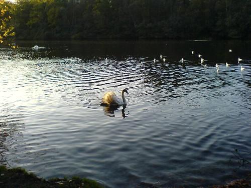 Lago Virginia 018