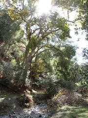 Sunol Regional Wilderness Park - Creek Trail