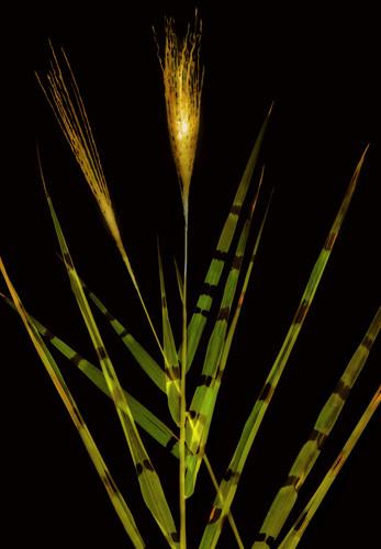Bamboo 1