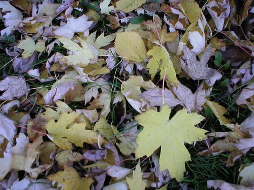 Leafmeal