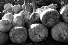 21.1 Pumpkin seller