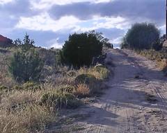 Tee NM_021_NM Road Landscape