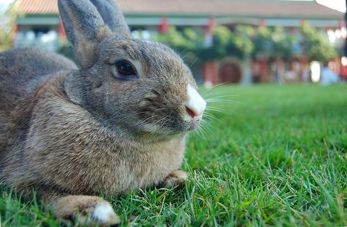 小兔(黑)1