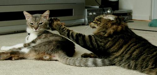 cat stretch closeup