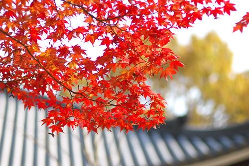 Nin'naji temple (仁和寺)